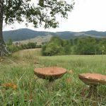 gljive Divcibare